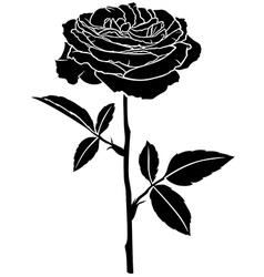 Rose rose vector