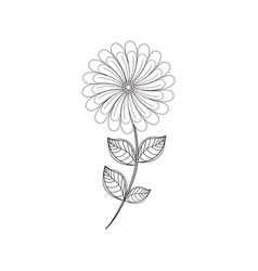 camomile flower decoration line vector image