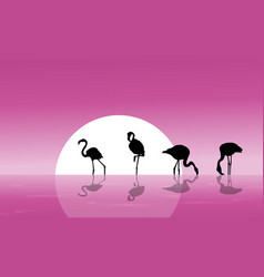 Flamingo on lake scenery silhouettes vector