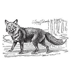 Red fox vintage vector