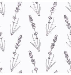 Hand drawn lavender branch and flowers outline vector