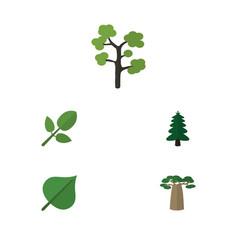 Flat icon bio set of garden hickory baobab and vector