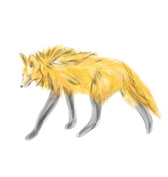 Maned wolf vector