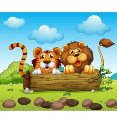 A lion and a tiger hiding vector image vector image