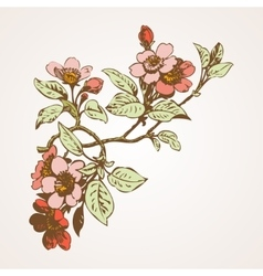 Cherry branches with flowers sakura vector image