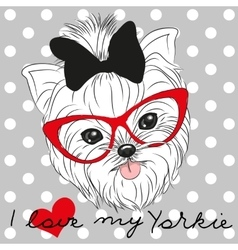 Cute Yorkshire Terrier vector image