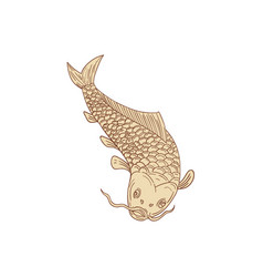 Koi nishikigoi carp diving down drawing vector
