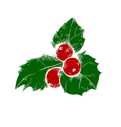 sketch of christmas holly berry vector image vector image