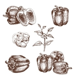 Hand drawn set of bell peppers vector