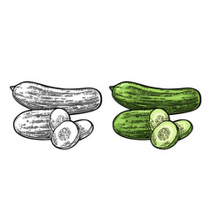 Fresh green cucumbers - whole half slices vector