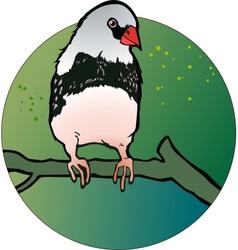 zebra finch bird vector image