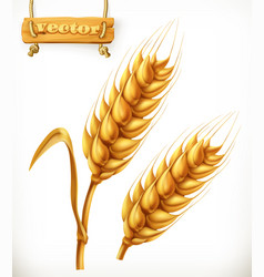 Wheat 3d icon vector