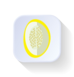 Melon fruit vector