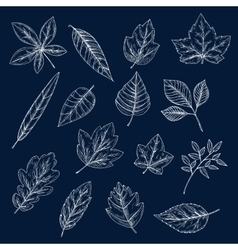 Chalk silhouettes of tree leaves vector