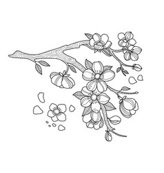 Cherry blossom coloring book vector