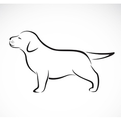 labrador puppies vector image