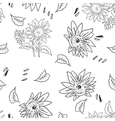 The composition sunflower vector