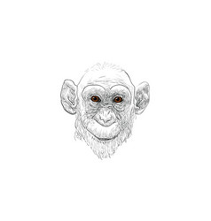 monkey face vector image