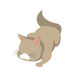Cat animal pet adorable domestic vector
