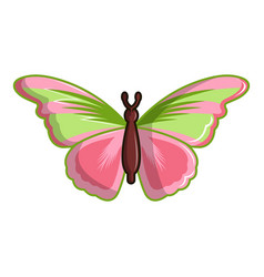 Esmeralda butterfly icon cartoon style vector