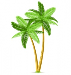 Tropical palm trees vector