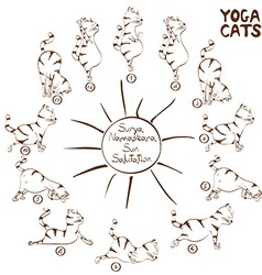 Cat doing yoga position of Surya Namaskara vector image vector image