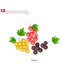 White black and red currant vector