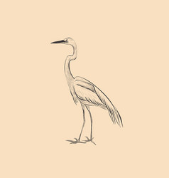 heron is a sketch hand vector image