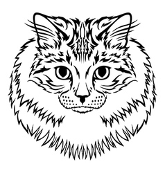 siberian cat vector image