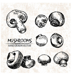 digital detailed mushrooms hand drawn vector image vector image
