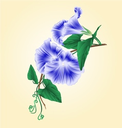 Flower morning glory blue vintage vector