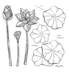 sketch set of flowers and leaves of the vector image vector image