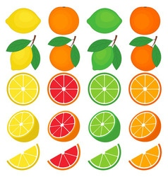 Citrus set vector