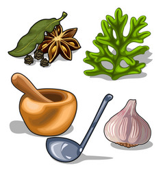 Spices and utensils for cooking isolated vector