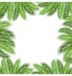 Leaves of palm vector image