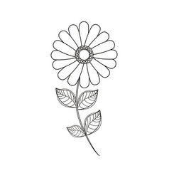 Flower daisy floral decoration line vector