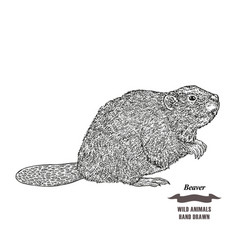 Forest animal beaver hand drawn black ink sketch vector