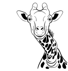a graphical image giraffe head ink sketch vector image vector image