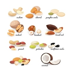 Set of various nuts and seeds vector