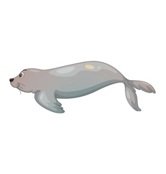 seal fish vector image