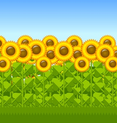 Sunflower field vector