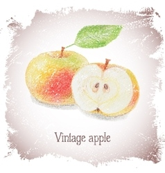 Vintage card with apple vector