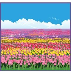 Field of tulips vector