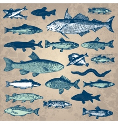 vintage fish set vector image