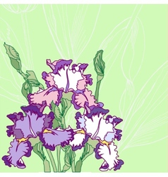 Background with blue pink irises vector