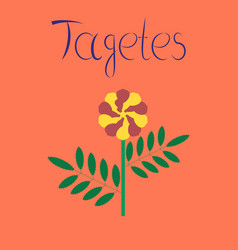 Flat on background plant tagetes vector
