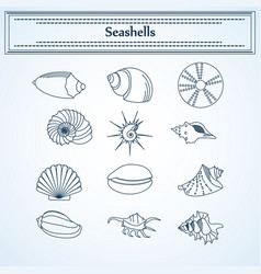 set of seashells in a linear style vector image