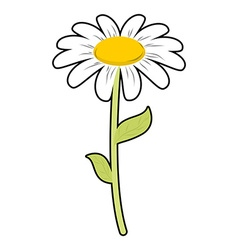 Chamomile field flower white petals and green stem vector