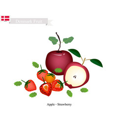 Apple and strawberry the popular fruits vector