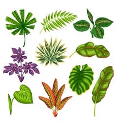 Set of stylized tropical plants and leaves vector